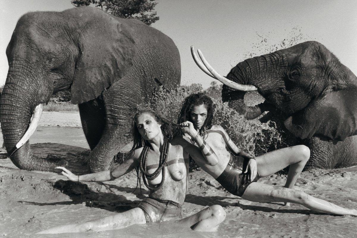 Ххх слон порно, Порно Слон - редкое секс видео и фото качаем бесплатно 2 фотография